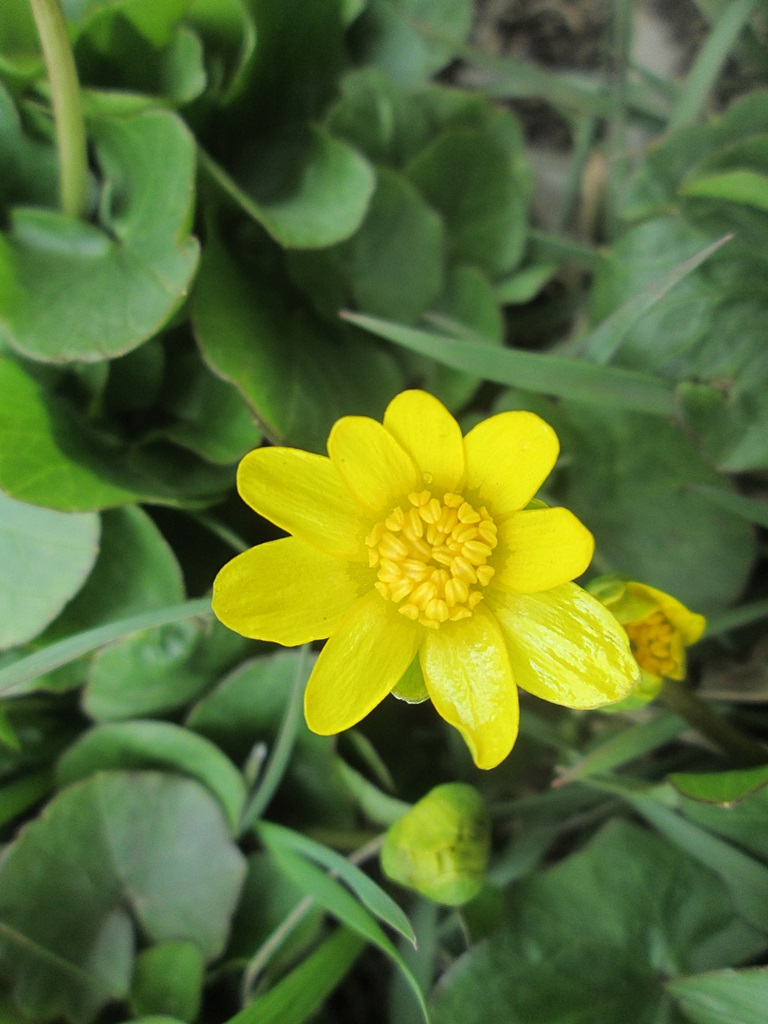 весенние цветы фото 1 (3)