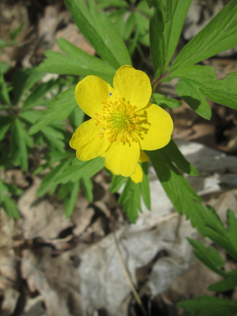 весенние цветы фото 2 (1)