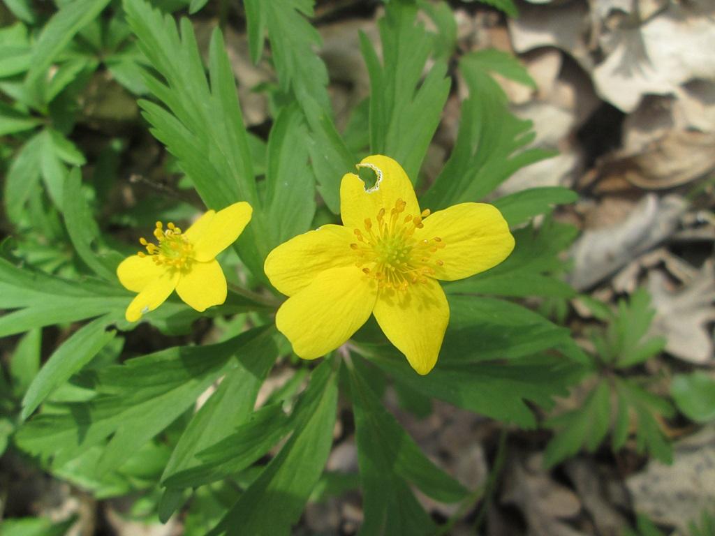 весенние цветы фото 3 (5)