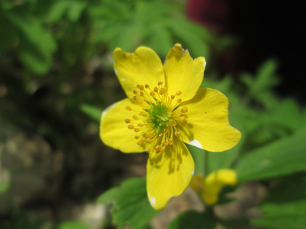 весенние цветы фото (3)
