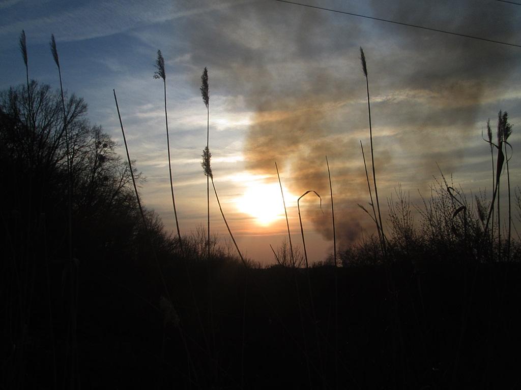 Burning grass: 20 photo effects (1)