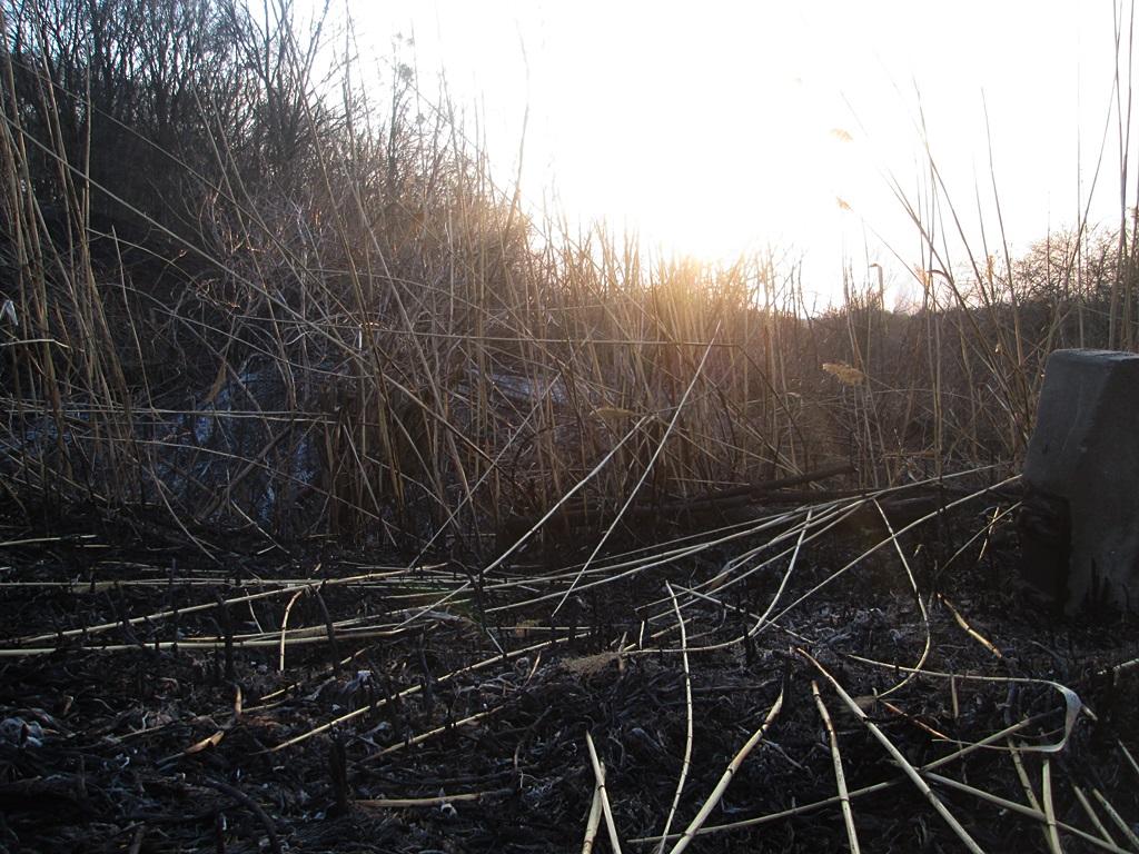Burning grass: 20 photo effects