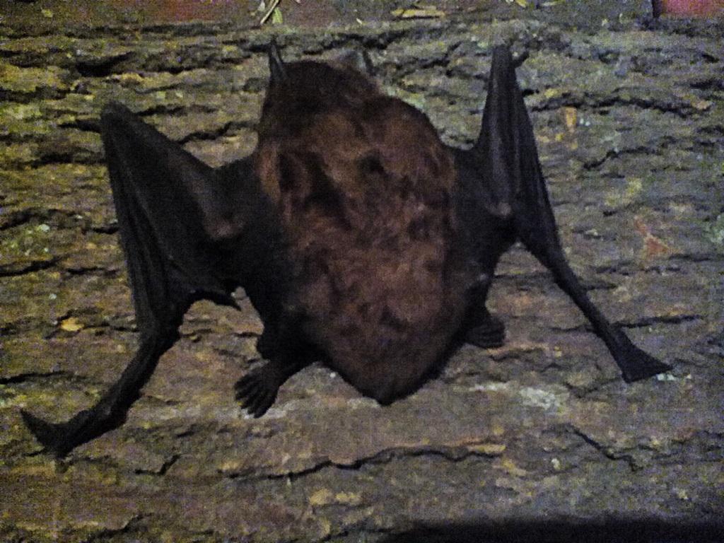Bat photos (11)
