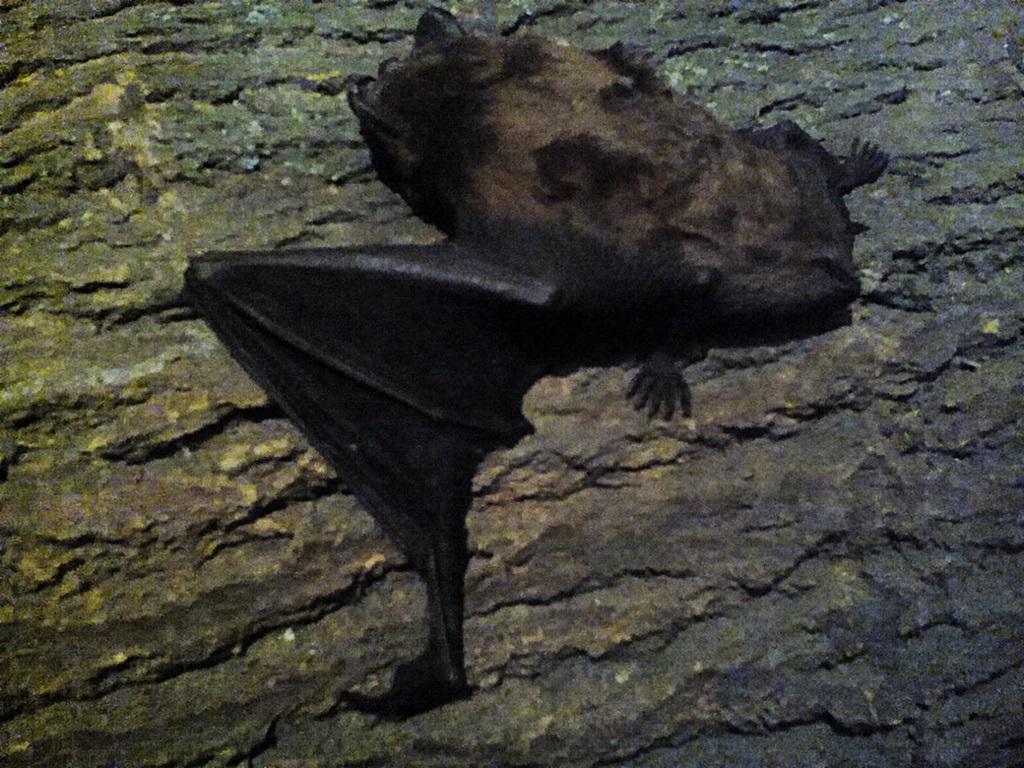 Bat photos (18)