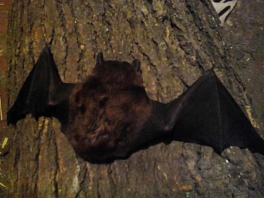 Bat photos (3)