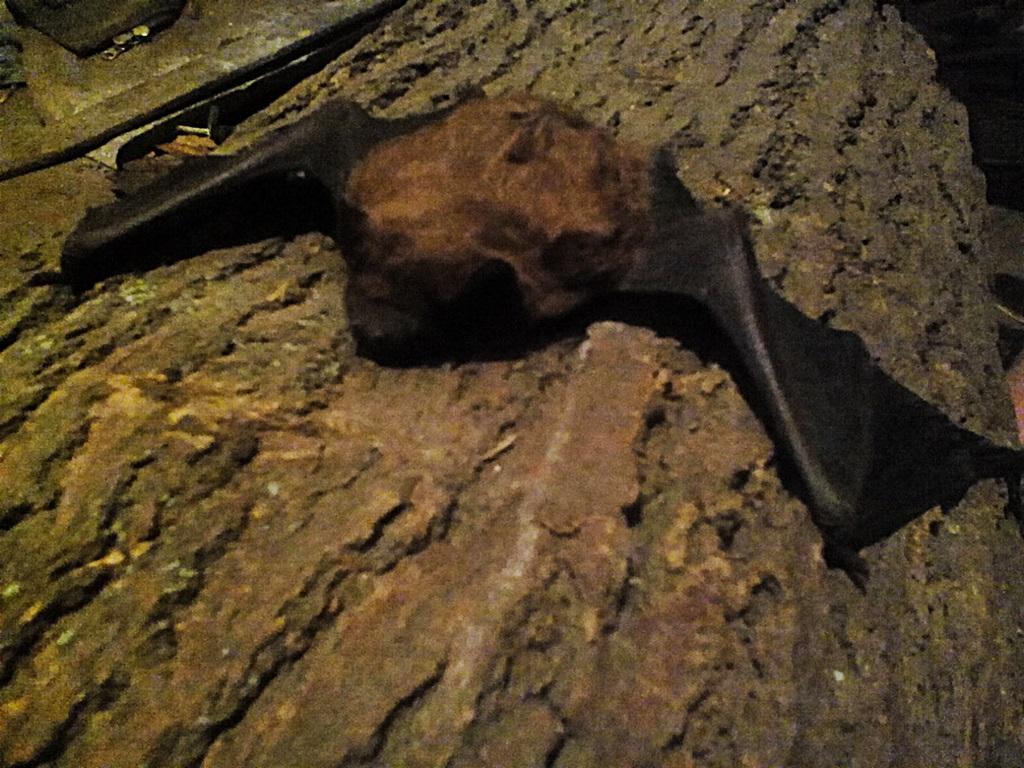 Bat photos (9)
