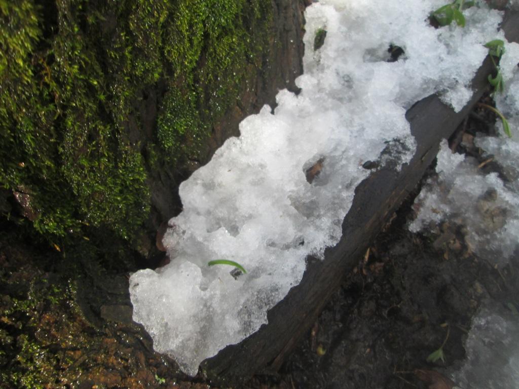снег весной фото (1)