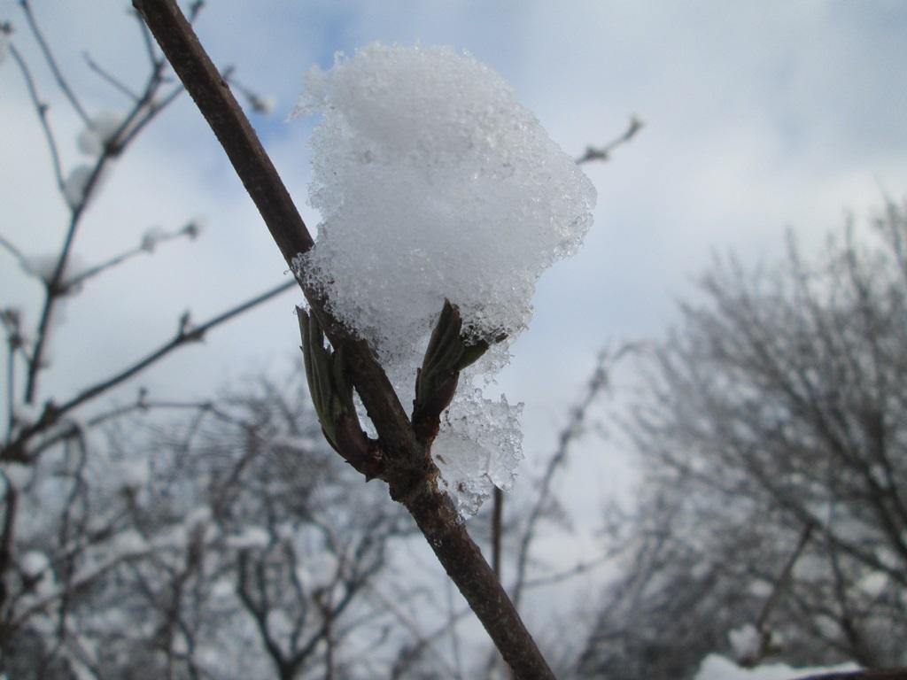 Snow in the spring – 60 photos