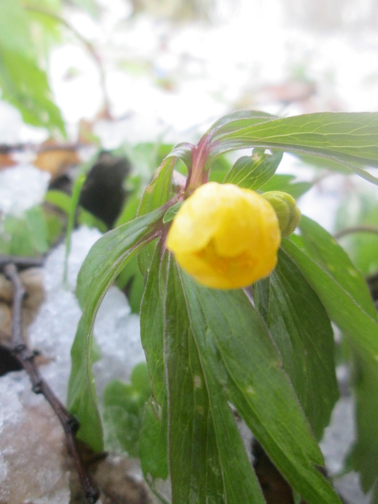 снег весной фото (119)
