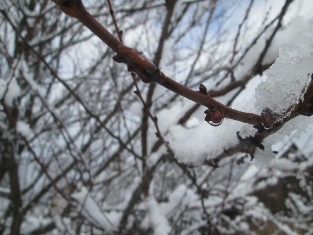 снег весной фото (13)