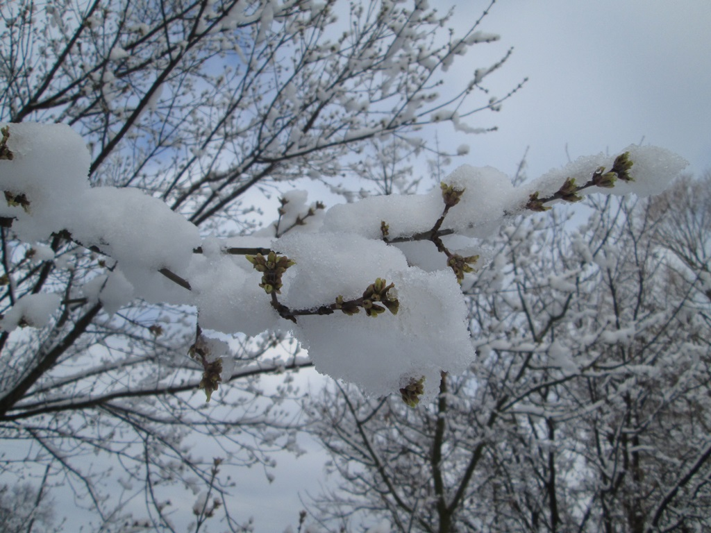 снег весной фото (20)