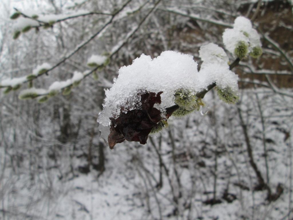 снег весной фото (26)