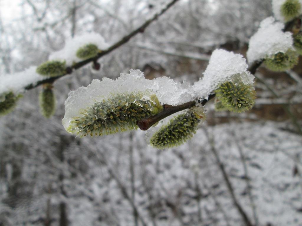 снег весной фото (28)