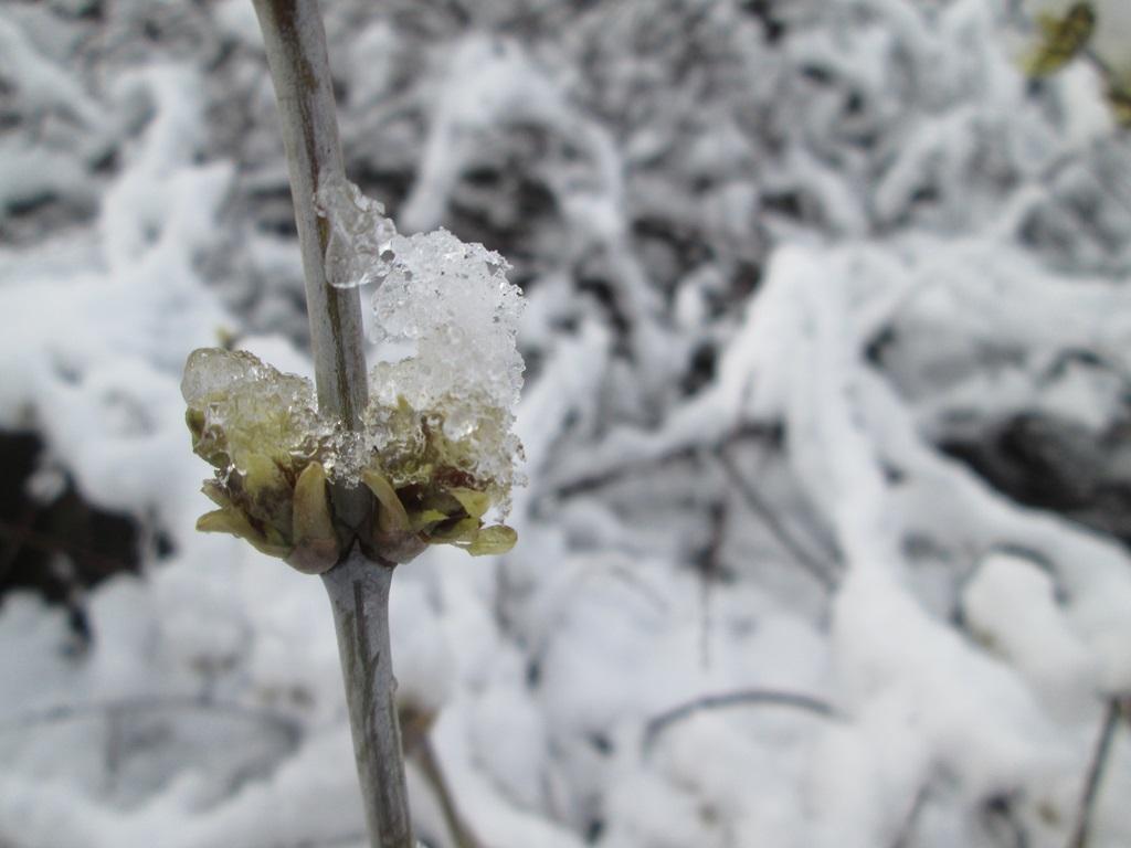 снег весной фото (3)