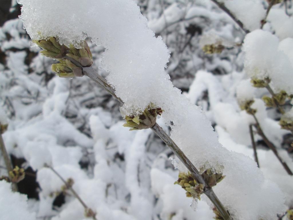 снег весной фото (4)