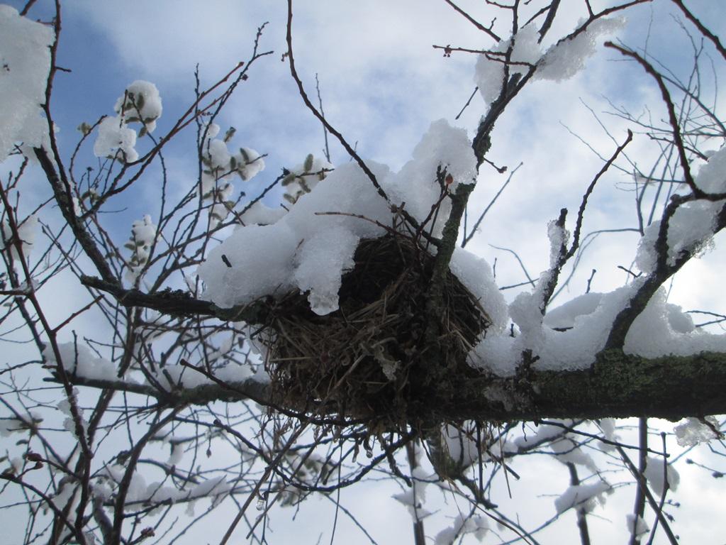 снег весной фото (42)