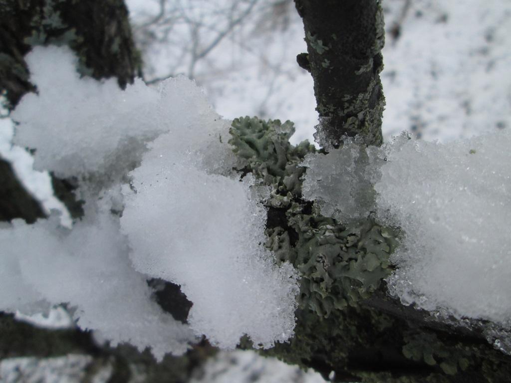 снег весной фото (49)