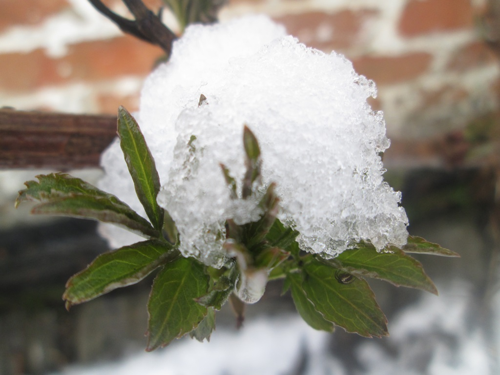 снег весной фото (67)