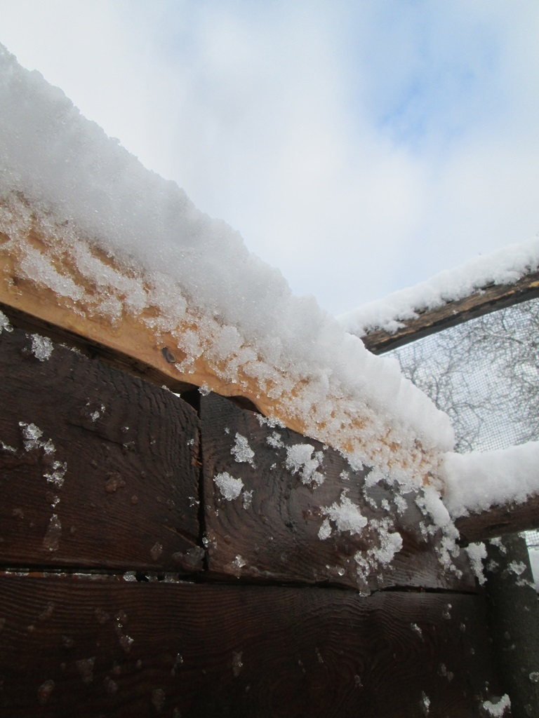 снег весной фото (8)