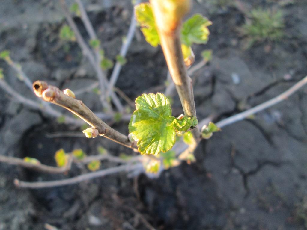 фото весна природа 3