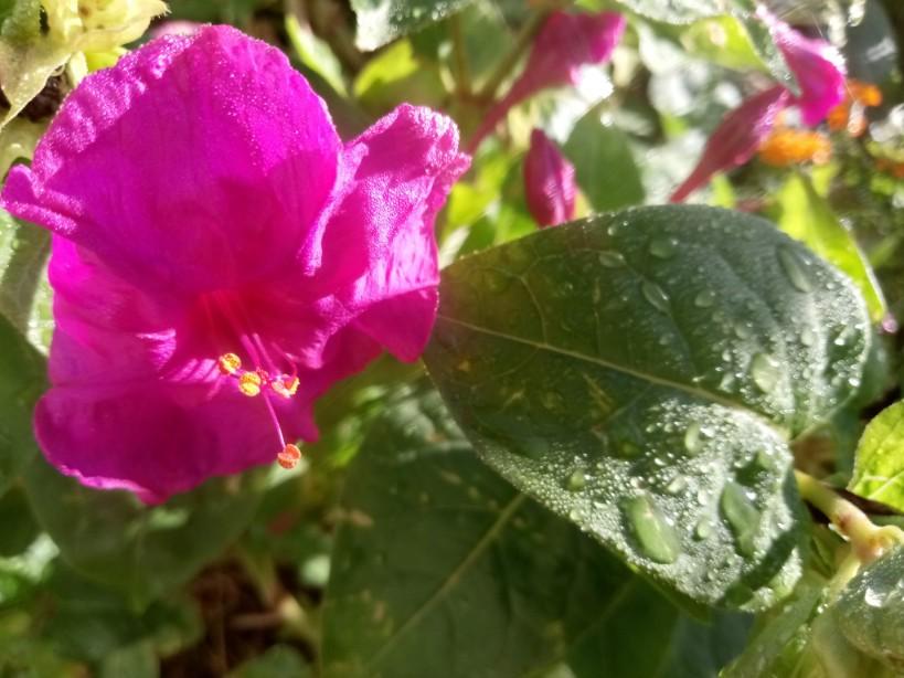 Autumn flowers photos