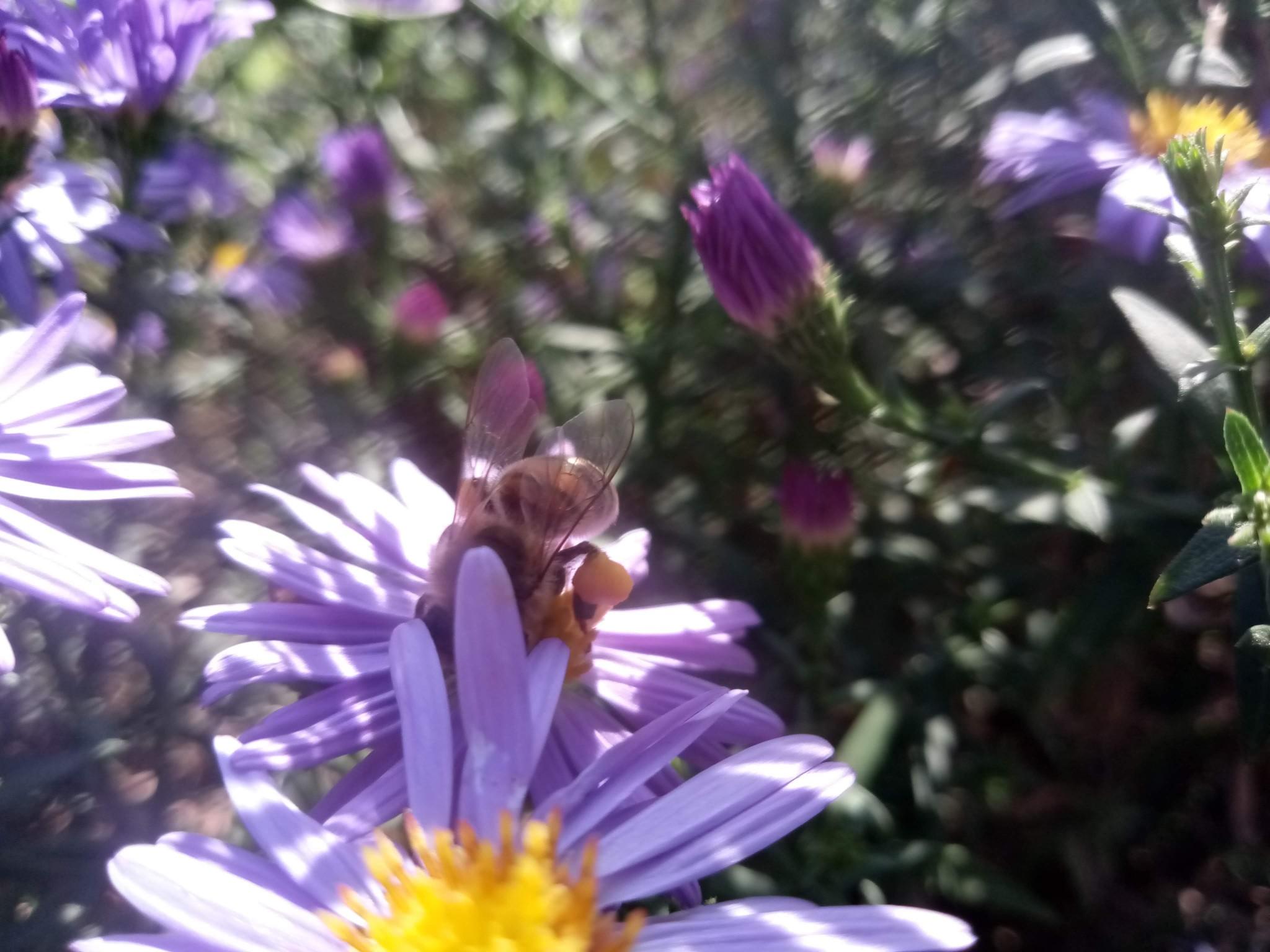 Bee on flowers photo