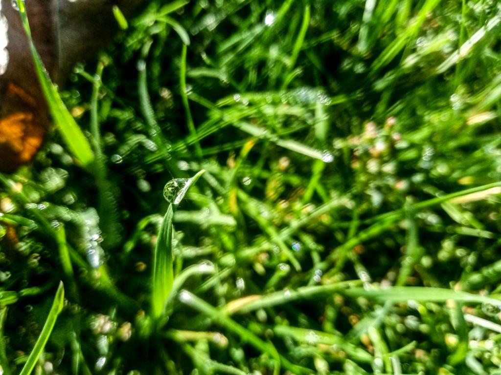 Dew drops photo 11
