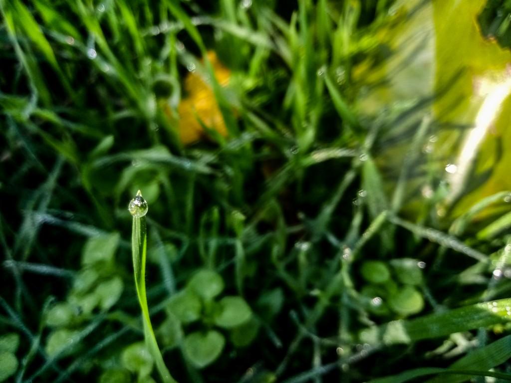 Dew drops photo 13