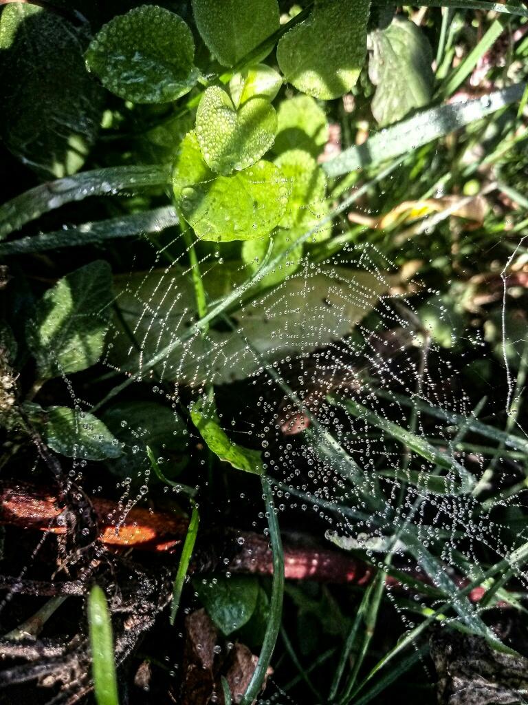 Dew drops photo 15