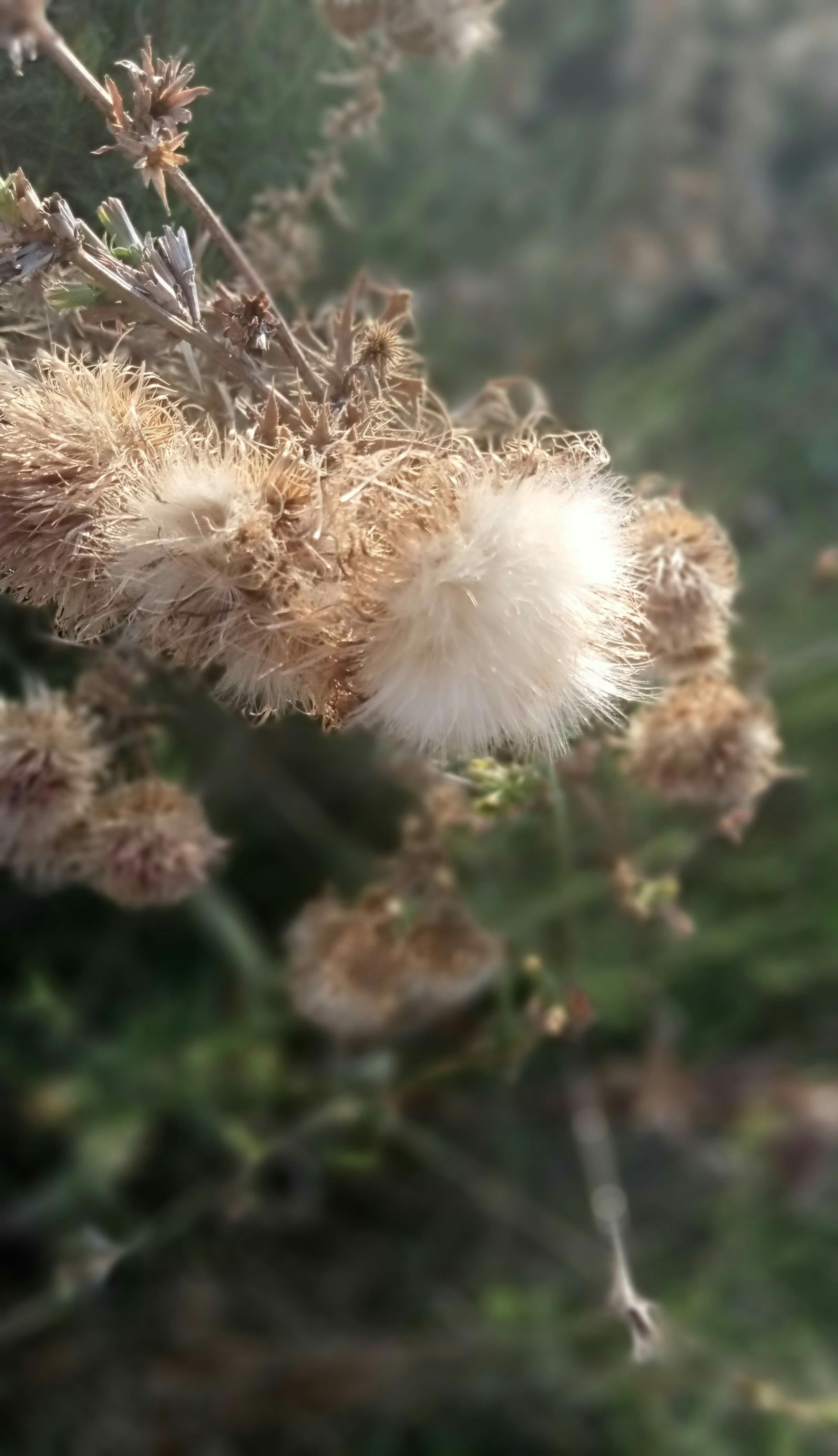 Dry autumn plants photo