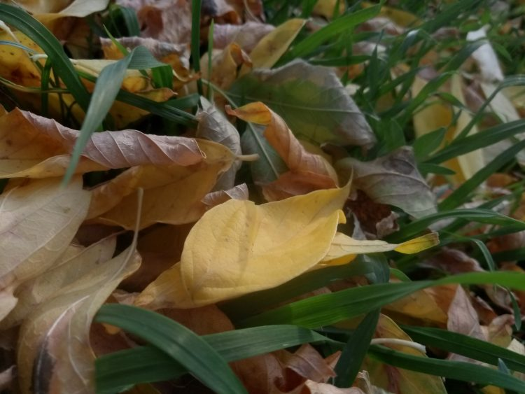 Yellow autumn leaves part 3