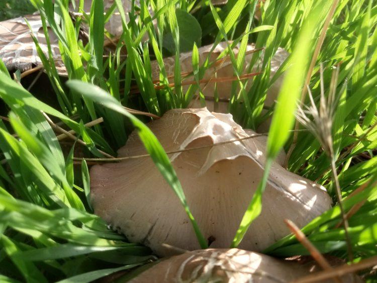 Autumn mushrooms photos