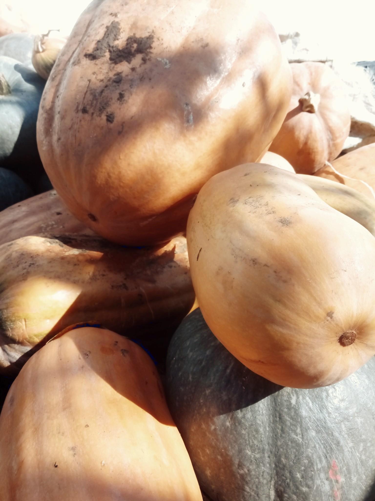 Pumpkins photo 2