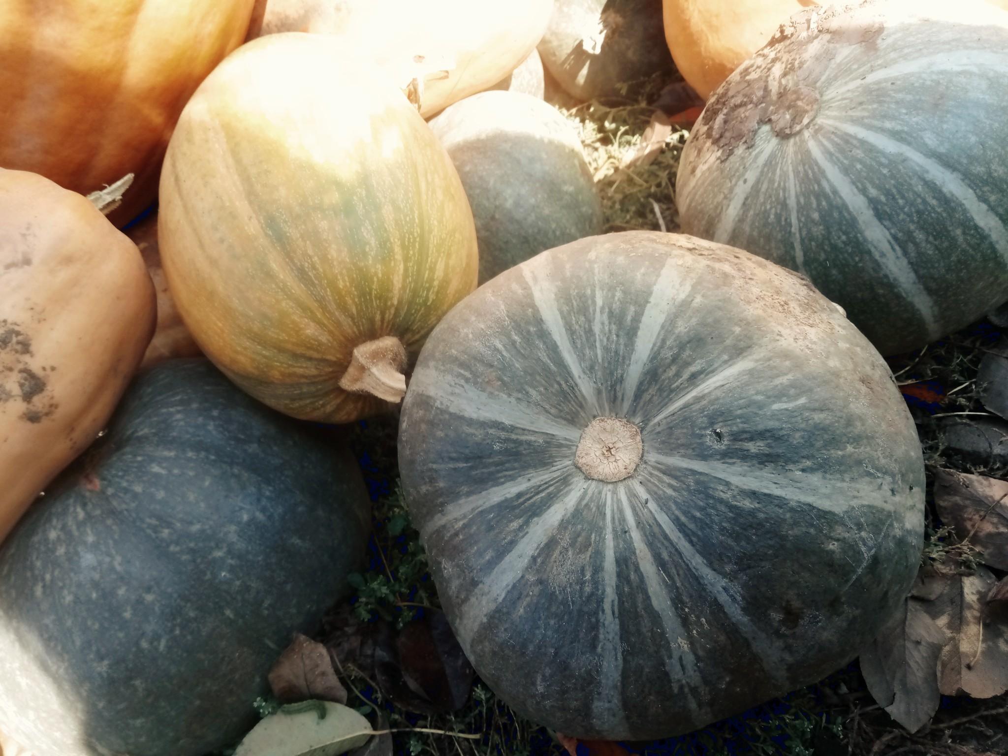 Pumpkins photo 5
