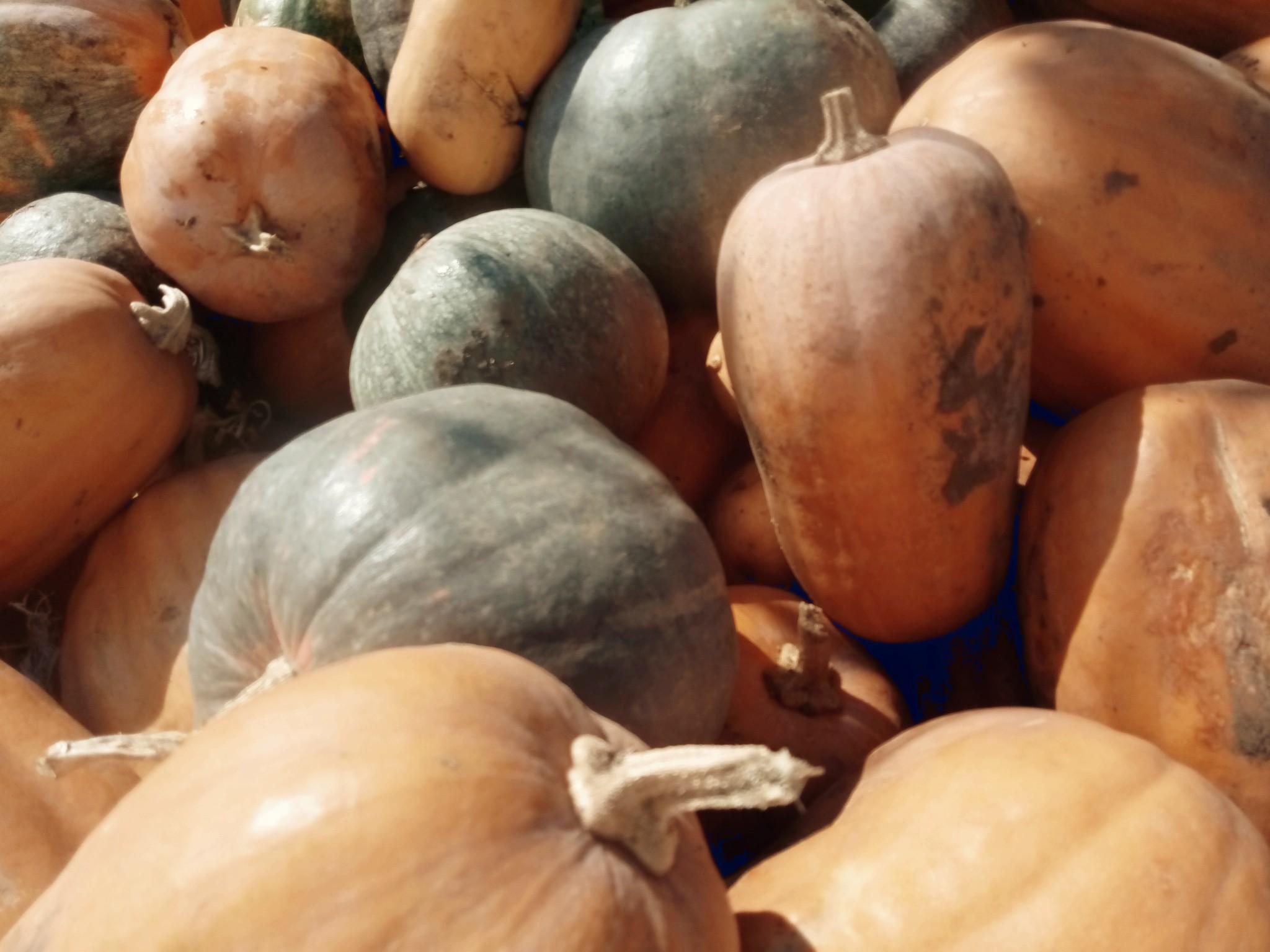 Pumpkins photo 6