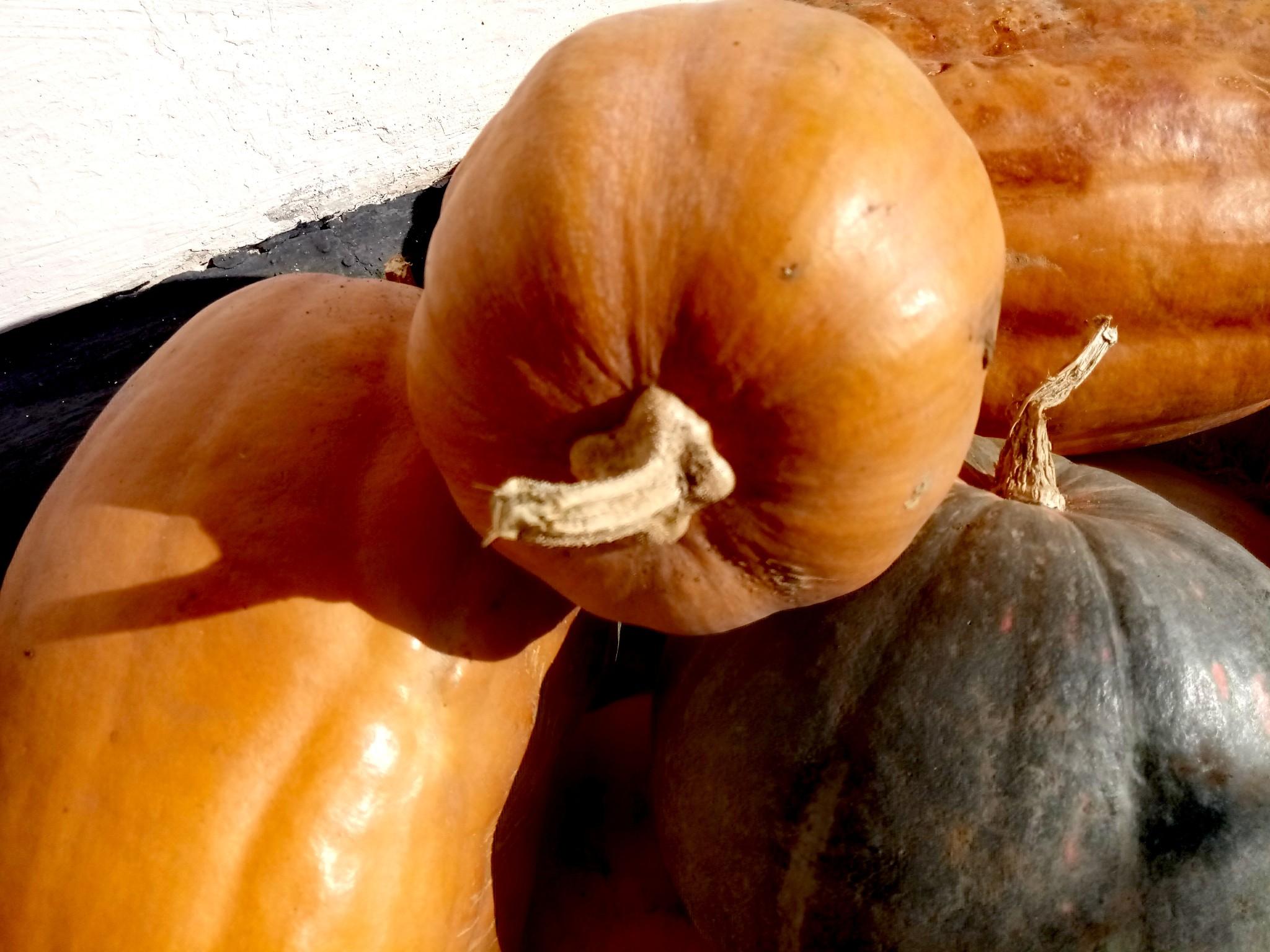 Pumpkins photo 8