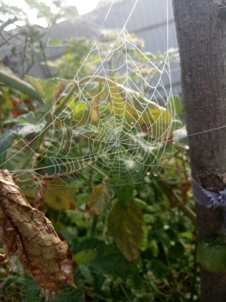 Spider web in fog photos part 2