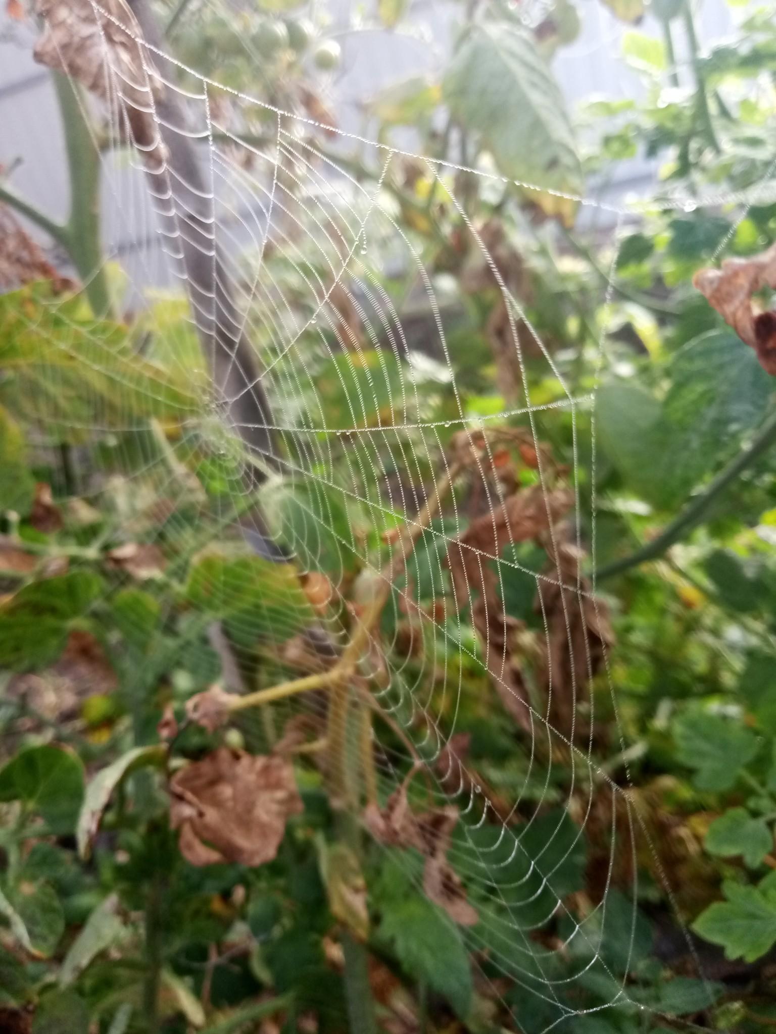 Spider web photo 8