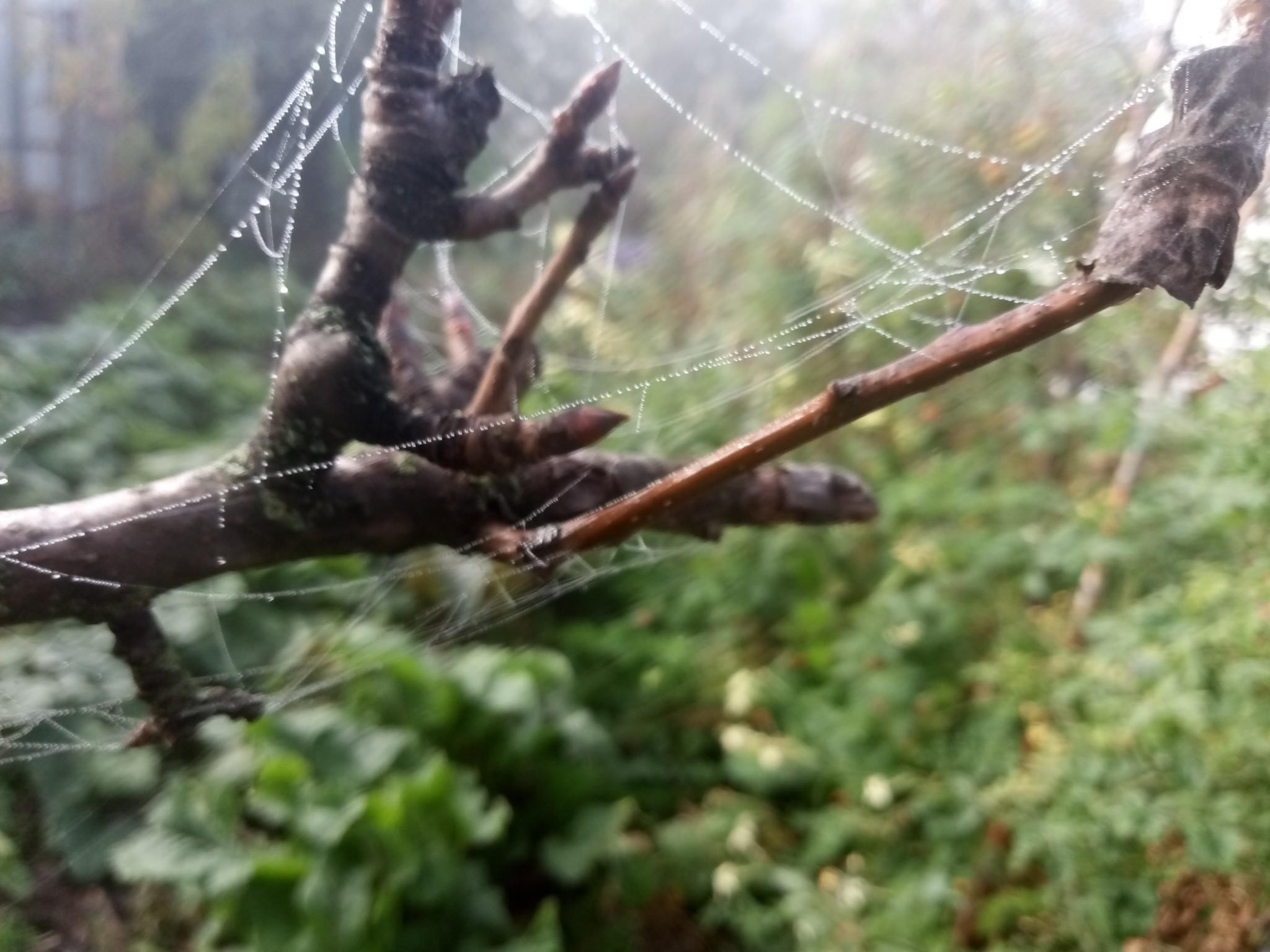 Spider web photo 6
