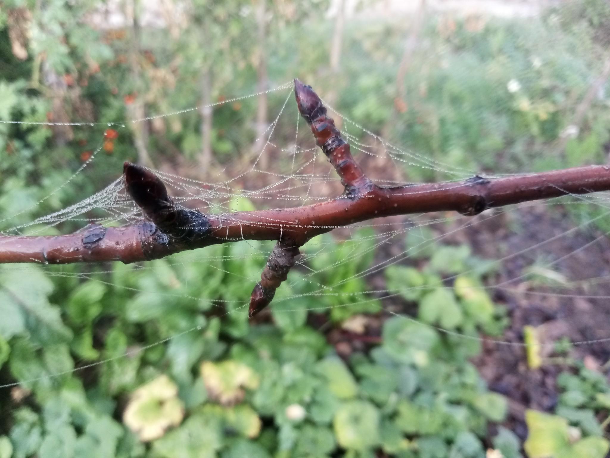 Spider web photo 4