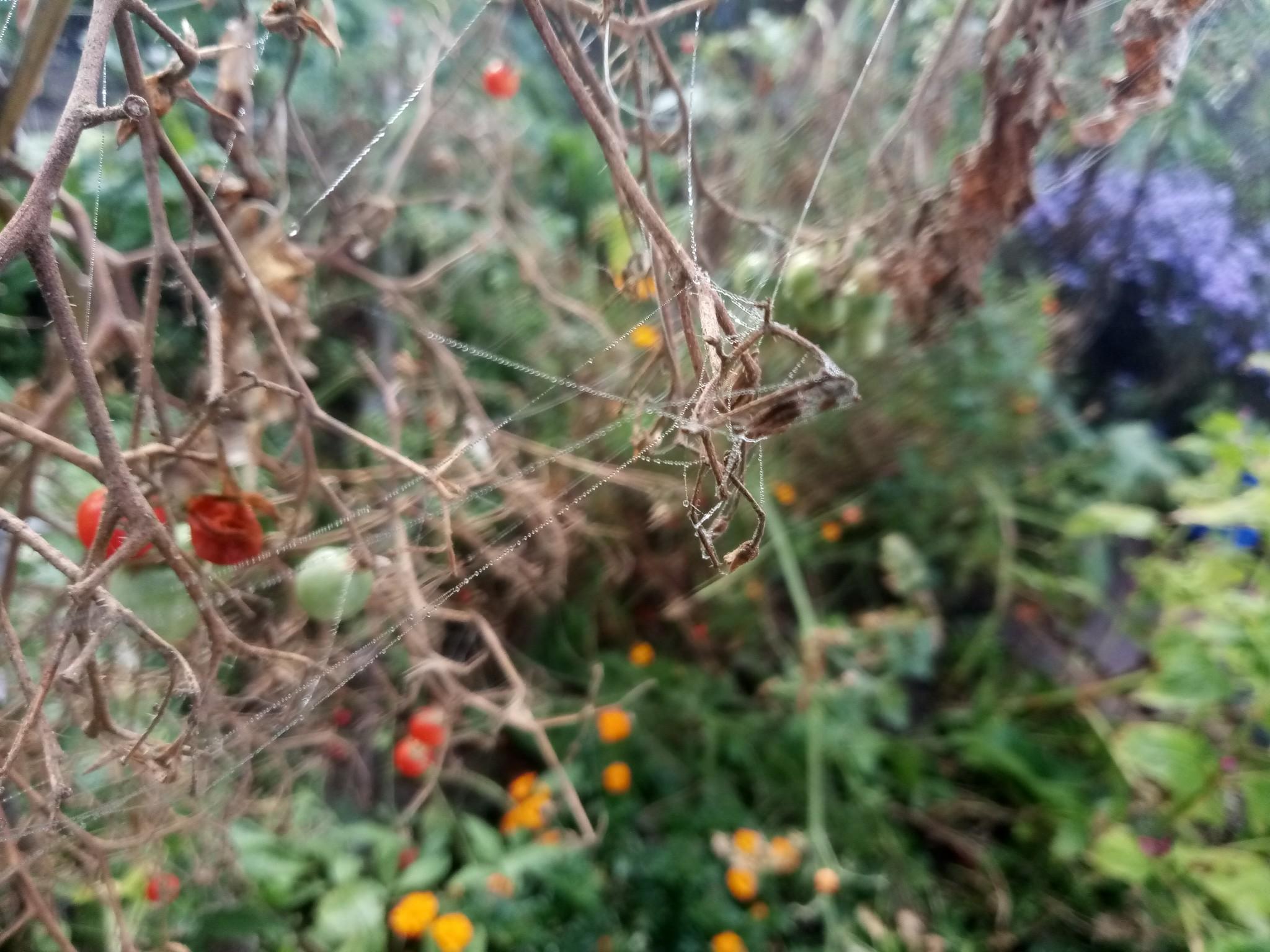 Spider web photo 2