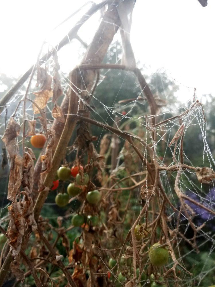 Spider web in fog ,10 photos  part 1
