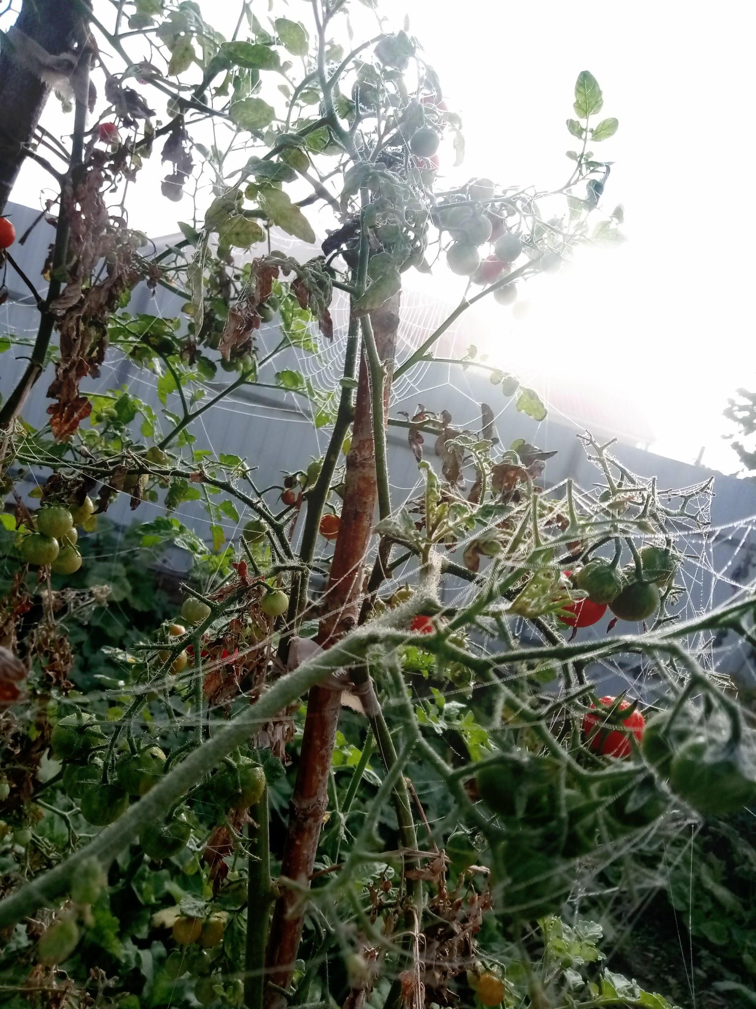 Spider web in fog photo 9