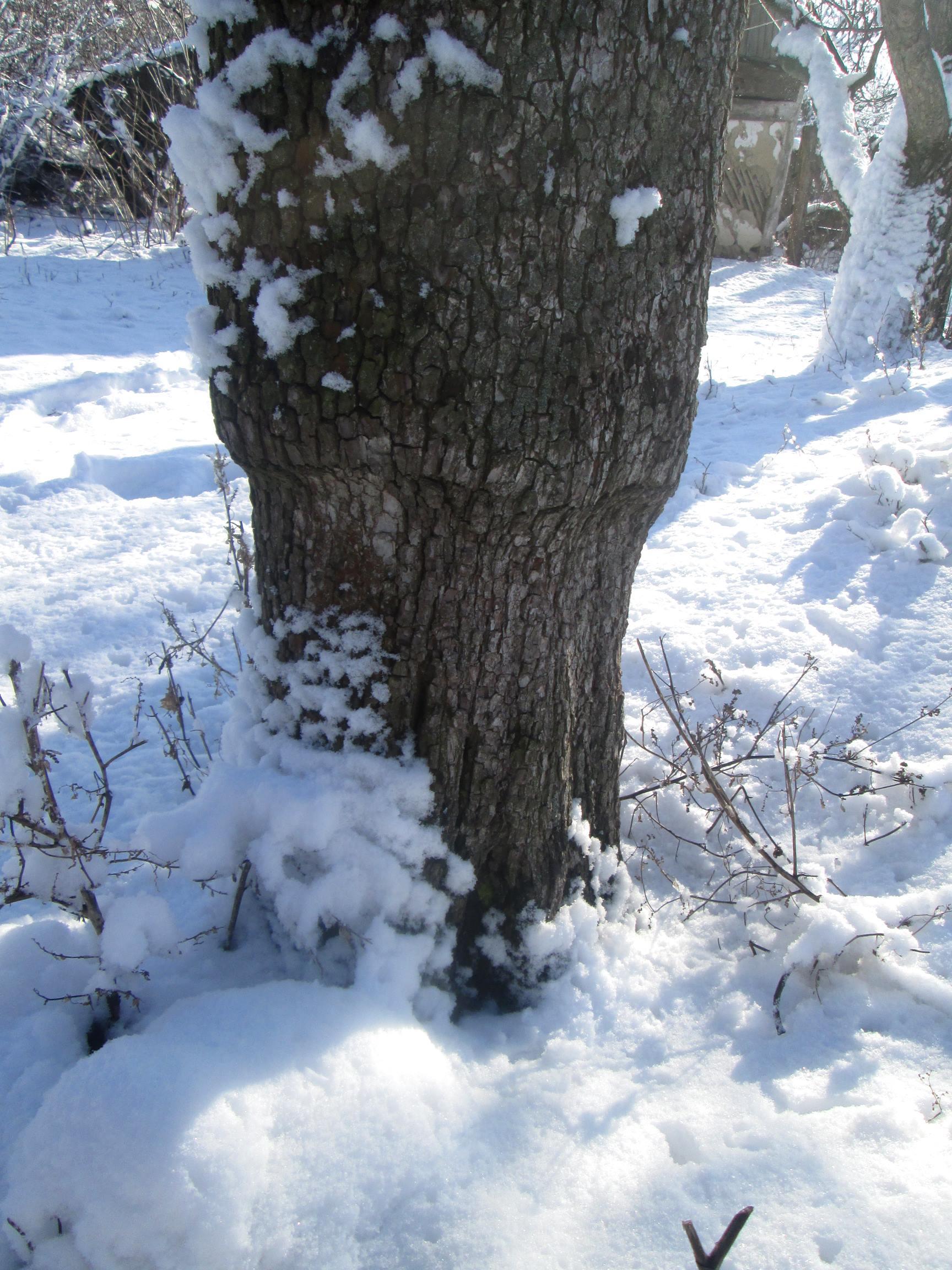 Winter trees photo 3