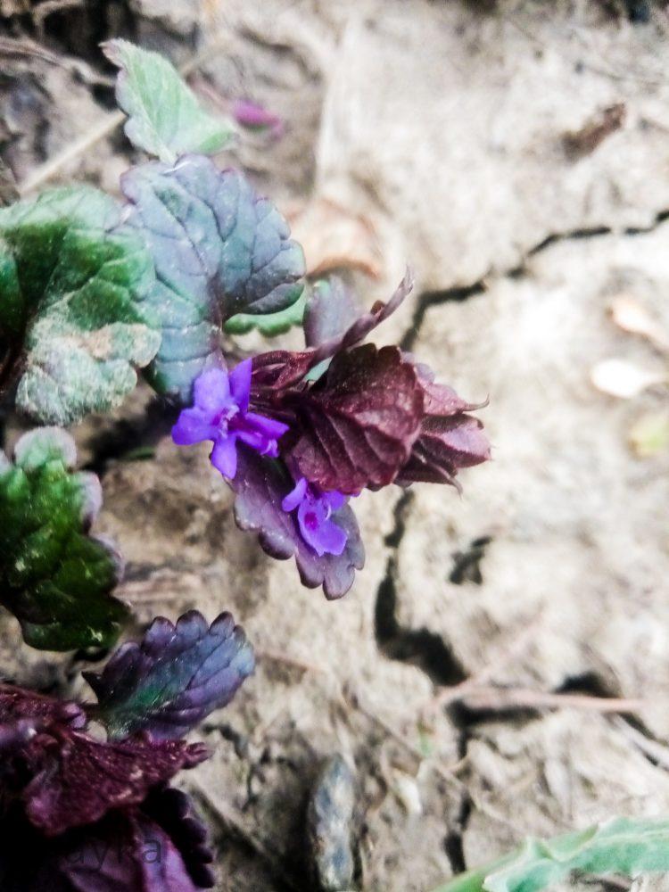 Spring purple flowers photos