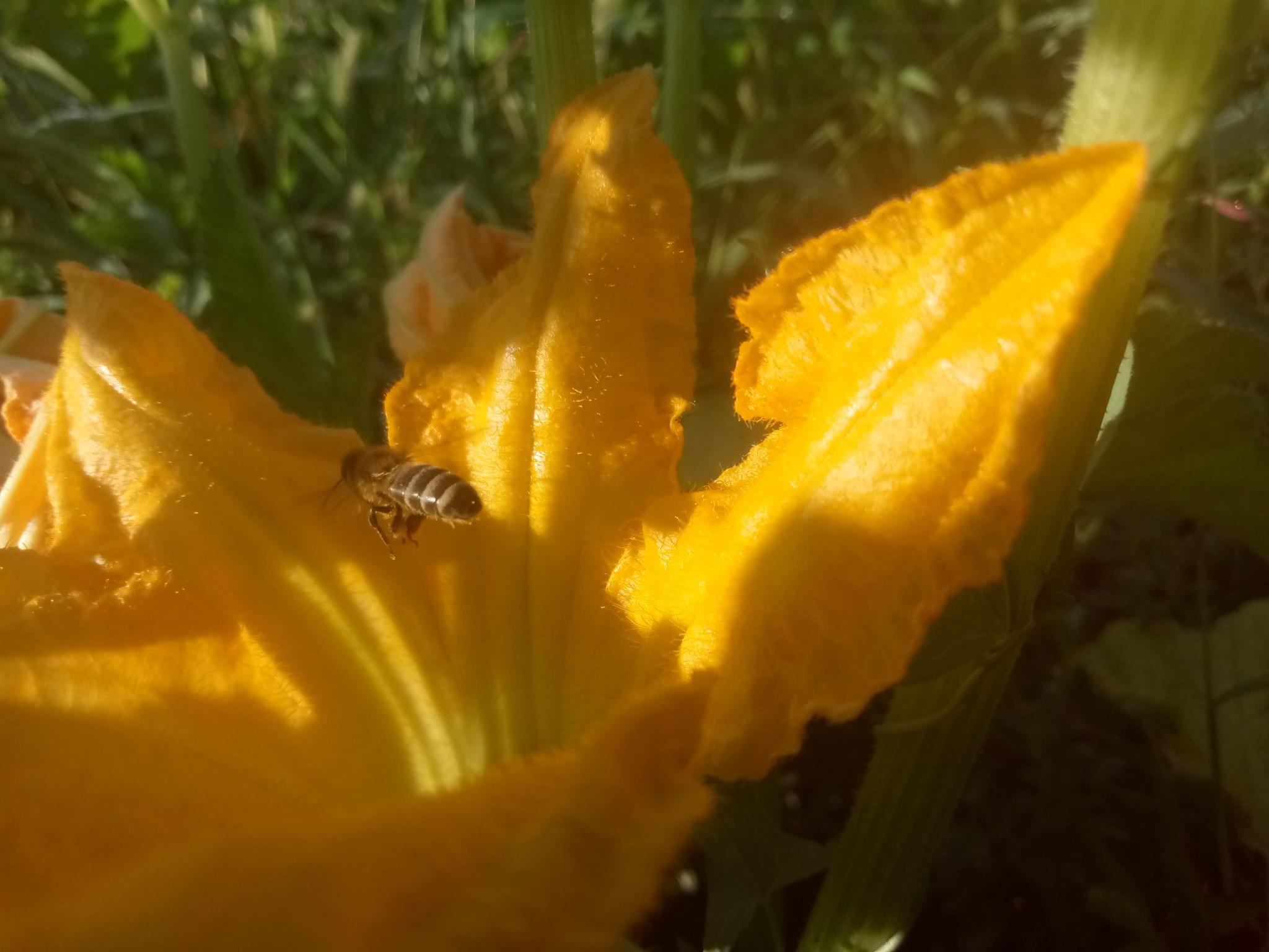 pumpkin flowers picture