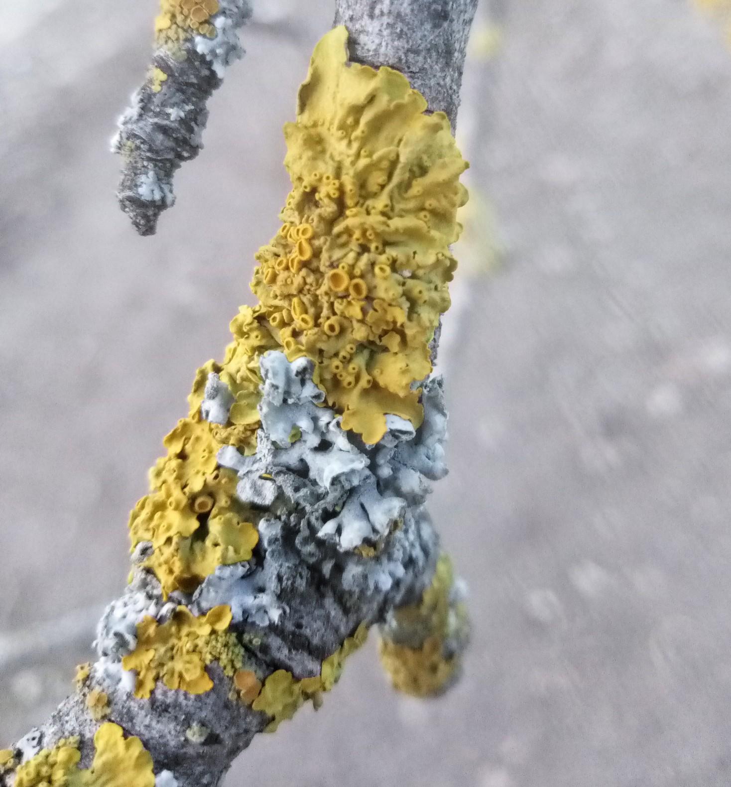 Tree fungus photo