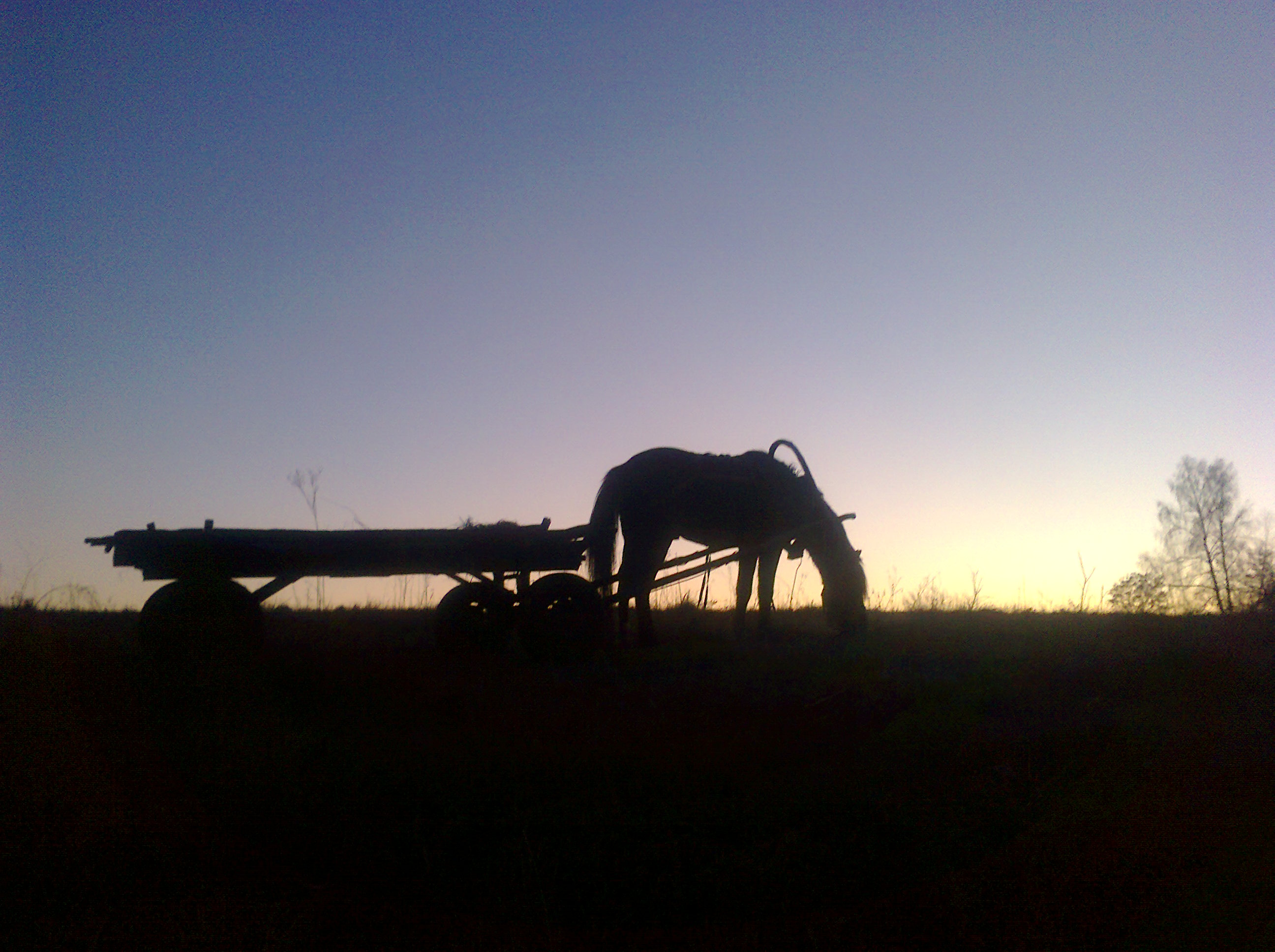 Sunset, silhouette of a horse in the rays of the setting sun – photo