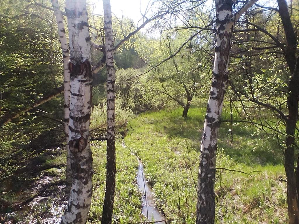 Photo Birch spring