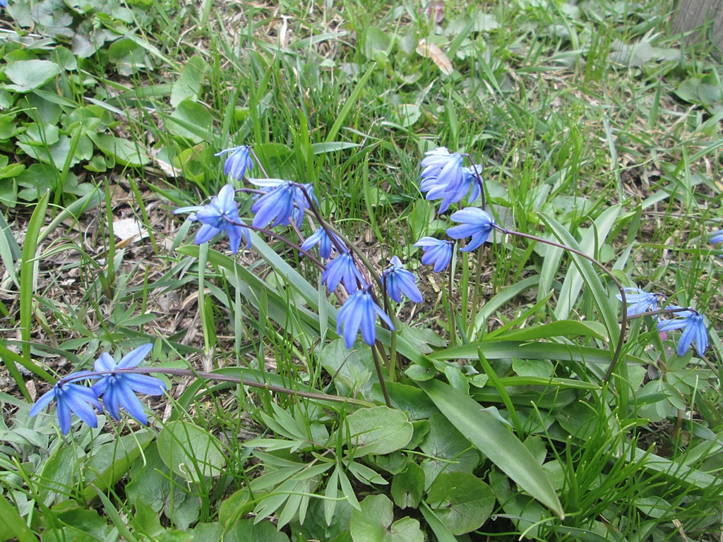 весенние цветы фото 1 (2)